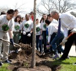 More than 11,800 trees to be planted in neighborhoods citywide