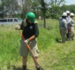 Volunteers get clearer understanding of forest preserves