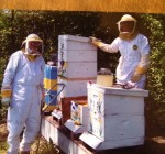 Bee colony collapse impacts McHenry County
