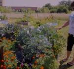 Kendall, Kane volunteers earn master gardener state honors