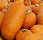 Find your pefect pumpkin at one of these farms