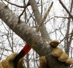 Expert: Tree care important in fall and winter months