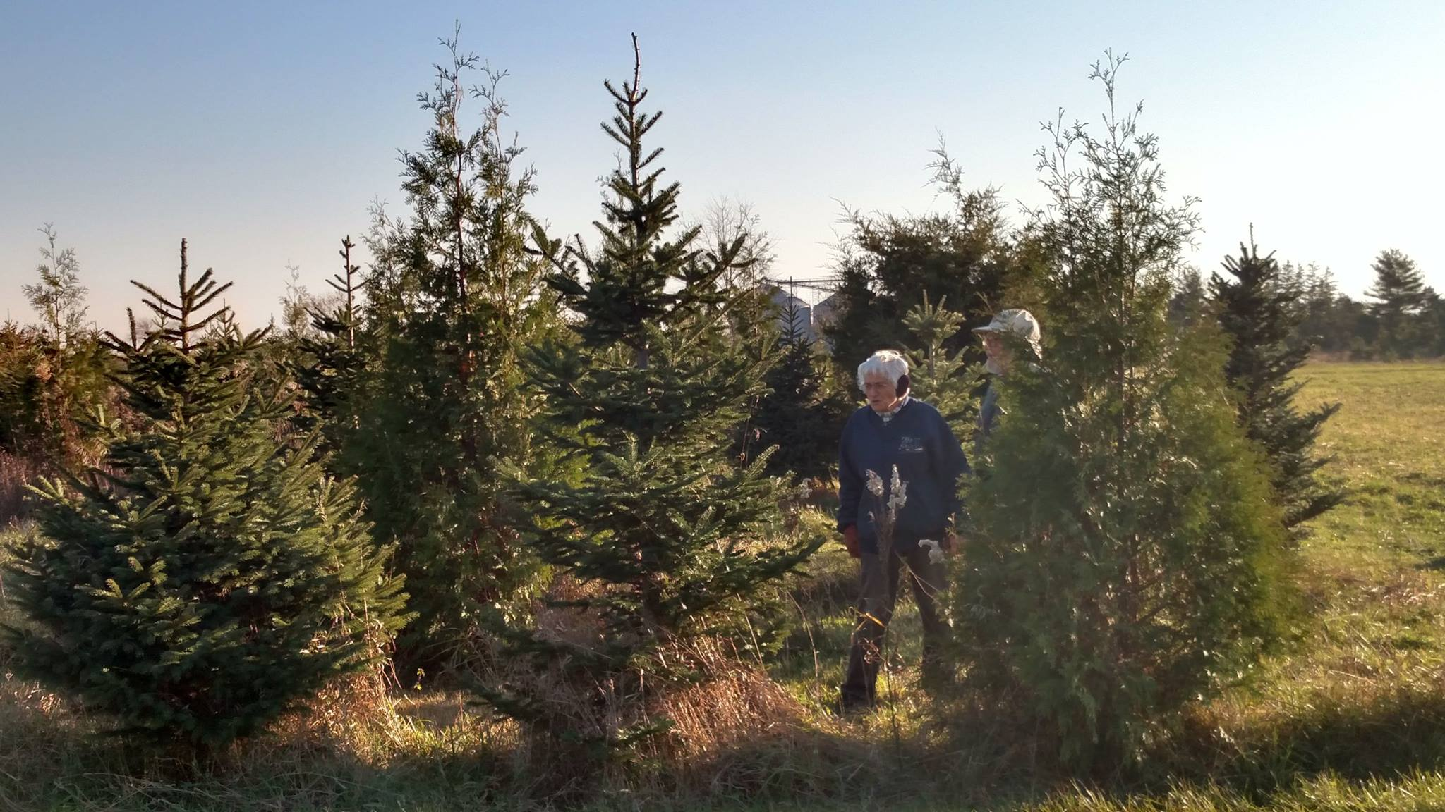 Finding A Fresh-cut Christmas Tree All About Tradition