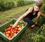 Small farms webinar series to start in January