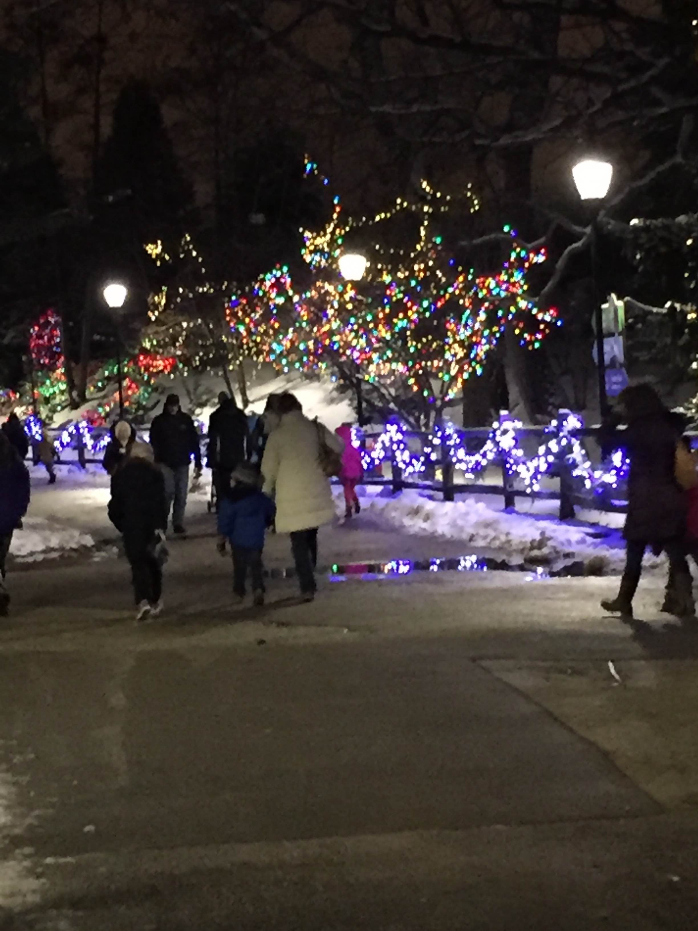 Visitors Take In The Holiday Magic At Brookfield Zoo Dec. 30. Photo By Judy