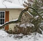 Take care in managing trees damaged during winter
