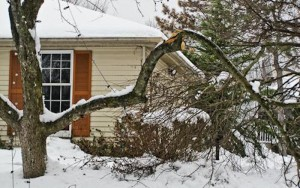 If you have tree damage from winter storms, first assess the damage and evaluate safety. Some pruning work may need professional care, according to horticulture experts at the University of Illinois Extension Offices. (Photo courtesy UMD Extension)