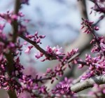 Ways to get some early spring blooms indoors