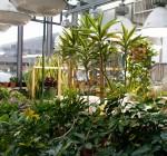 MWRD: Biosolids grow in popularity for nurturing plants