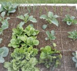 Square-foot gardening best utilizes small areas