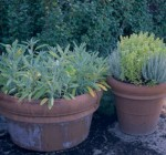 Early spring the time to start an herb garden from seed
