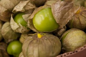 Tomatillos are a common vegetable found in Mexican-American family gardens. (Photo courtesy Oregon State Extension)