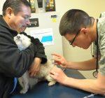 Veterinarians warn of canine flu outbreak
