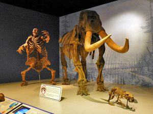 Visitors will be able to view this and other exhibits at the Illinois State Museum once again as the museum reopened to the public on July 2. The Springfield museum closed last fall from lack of funds. (Photo courtesy Illinois State Museum)