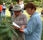 Master Naturalists removing invasive plants at area parks