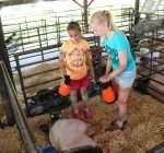 Woodford County 4-Hers shine at annual fair