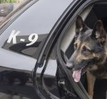 Kendall Co. adds another dog to K-9 team