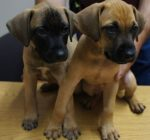 Sheriff's office investigating theft of six puppies – three found dead