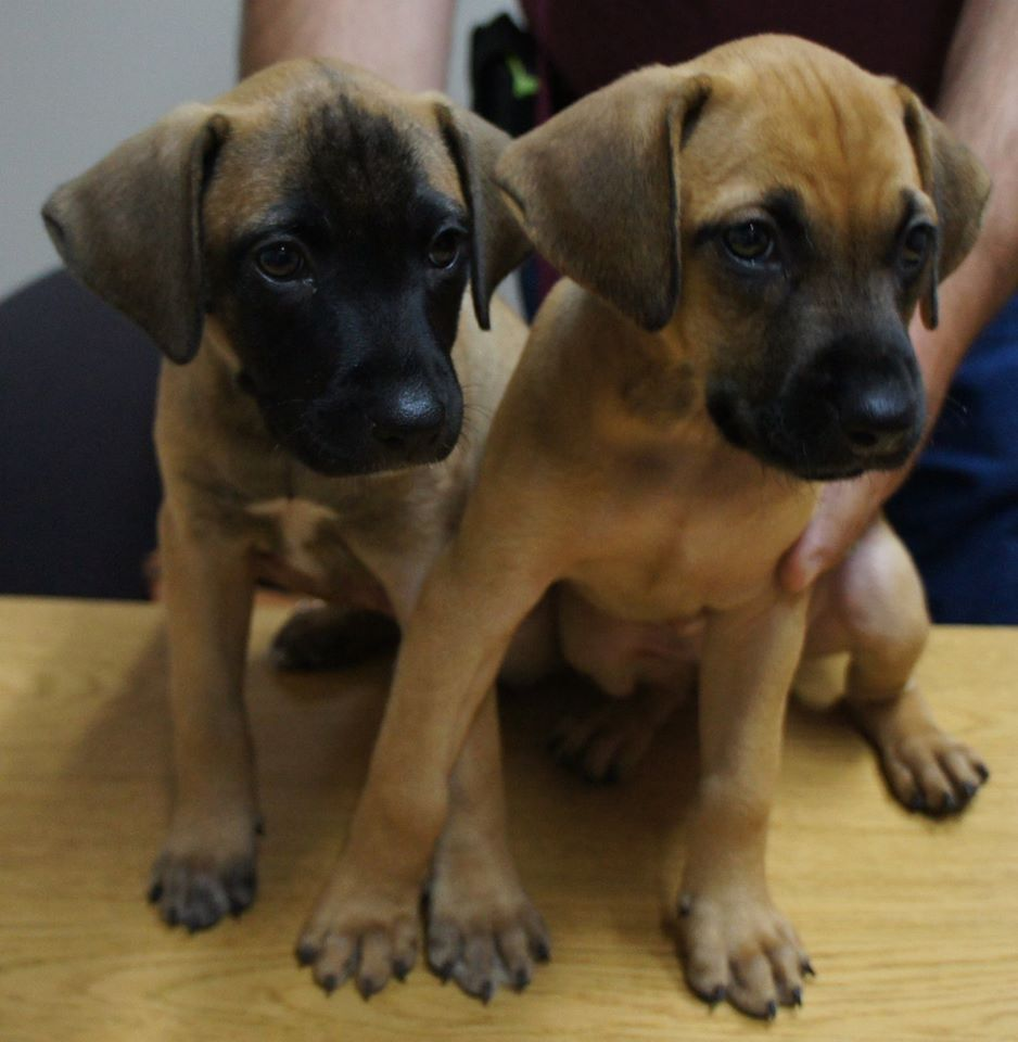 Sheriff S Office Investigating Theft Of Six Puppies