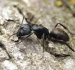 Ant control solutions for the home
