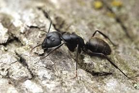 Lifestyles 080816 summer ants PHOTO