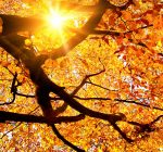 DuPage County forest preserves offer multiple ways to view fall colors