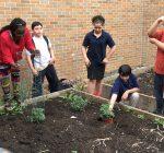 Extension's school gardens help teach kids the basics of gardening