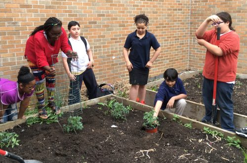 Extension's school gardens help teach kids the basics of gardening