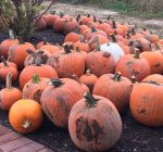 Your guide to pumpkin farms and Halloween attractions in northern Illinois