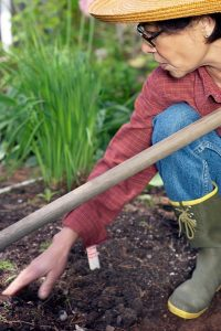 The most important part of fall bulb planting is proper depth. As a rule of thumb, plant the bulb two to three times as deep as it is wide. (Photo courtesy of University of Illinois Extension)
