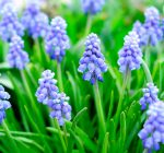 Fall is the time to plant bulbs for early spring displays