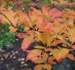 Bringing brilliant fall colors indoors