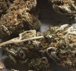 Legalized pot could help balance state budgets
