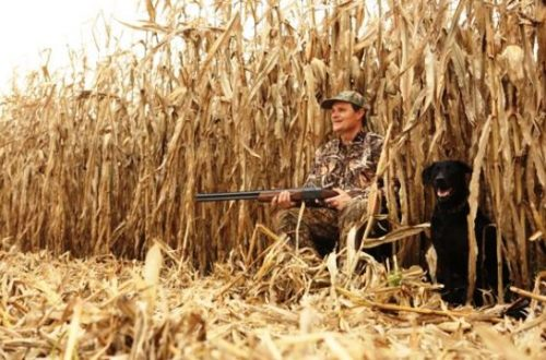 Investigation uncovers residency fraud in Illinois hunting, fishing licenses