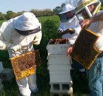 Upcoming classes in Peoria teach ins and outs of beekeeping