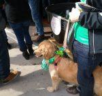 Chicago, suburbs ready to celebrate the Irish