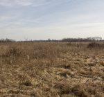 Return to the past as Danada wetlands to be restored to original habitat