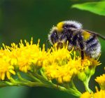Kane, conservation groups act to save bees and other pollinators