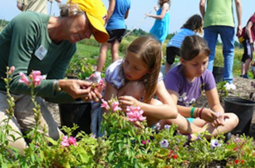 Intergenerational gardening provides many benefits