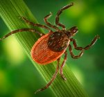 State health officials offer tips to avoid tick borne illness