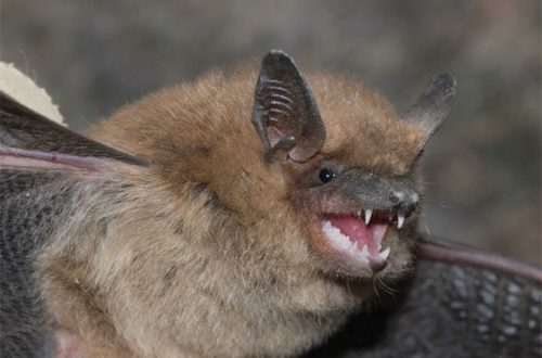 Illinois health officials caution to be aware of rabid bats
