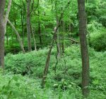 Late summer great for exploring suburban forest preserves