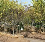 Fall months still offer a great time for tree planting
