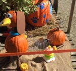 Pumpkin Palooza benefits Humane Society of Aurora