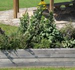 Native plants get head start in cool fall weather