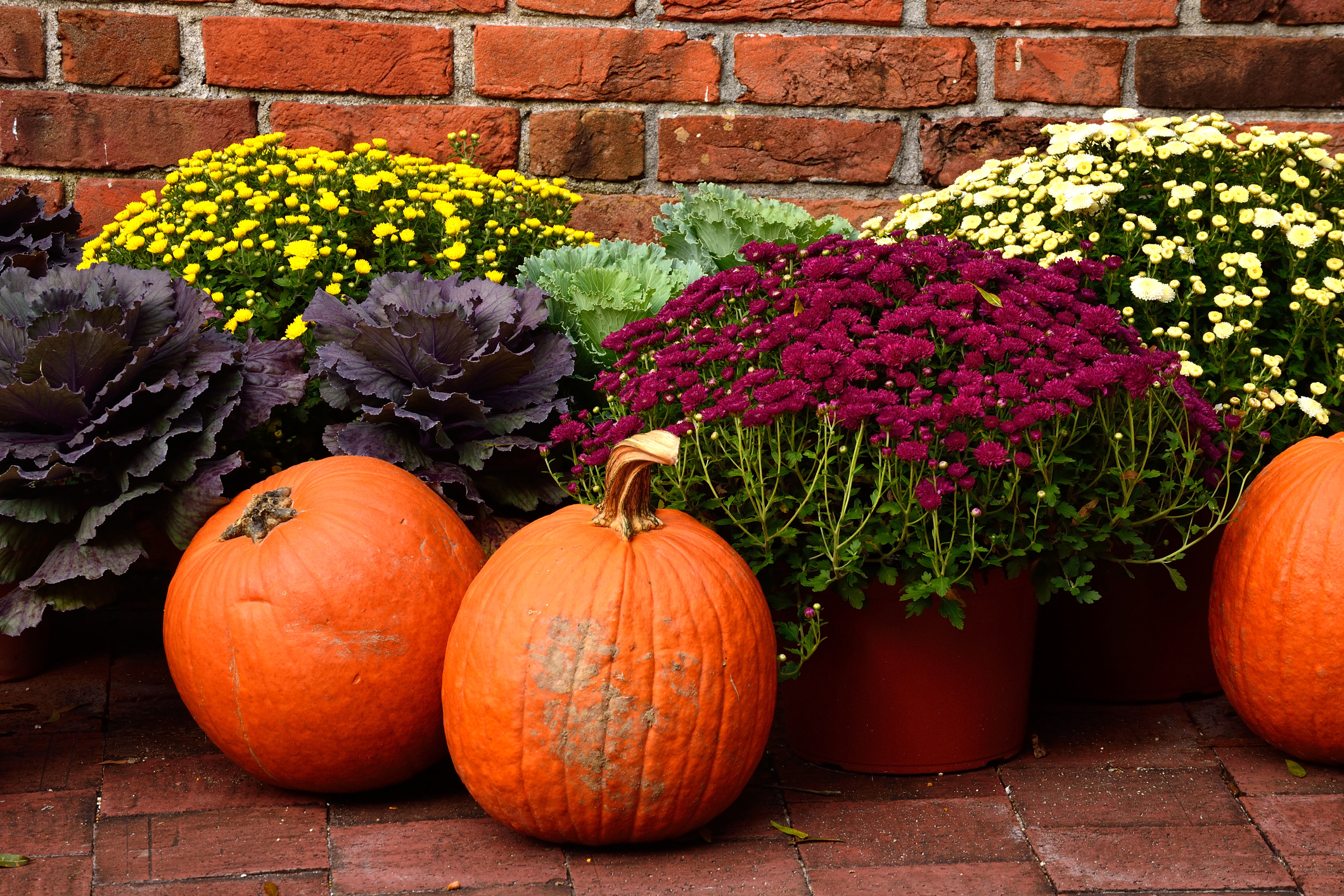 From Pumpkins To Mums How Pick