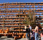 More than 20,000 jack o'lanterns created at Great Highwood Pumpkin Festival