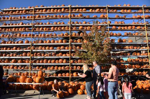 More than 20,000 jack o'lanterns created at Great Highwood Pumpkin Festival
