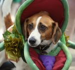 Hundreds of canines attend 9th annual Spooky Pooch Parade