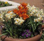 Get ready for spring planting at Sandwich workshop